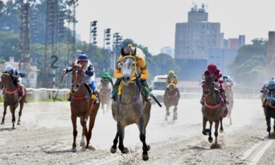 Prêmio UAE President Cup Series Fillies II movimenta a pista de areia do Jockey Club de São Paulo