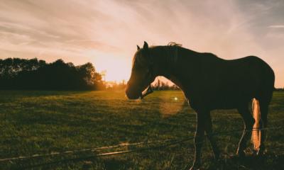 Saiba como preparar o seu cavalo para estação de monta