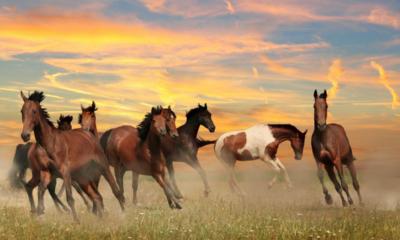 Suplementação nutricional de qualidade ajuda preparação e recuperação muscular dos equinos em competições