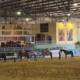 Vetnil investe na equinocultura e incentiva os esportes equestres no Brasil