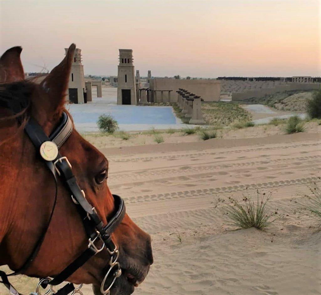 Cavalgada em Dubai com cavalos árabes