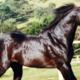 El Zorrero: um dos principais produtores da raça