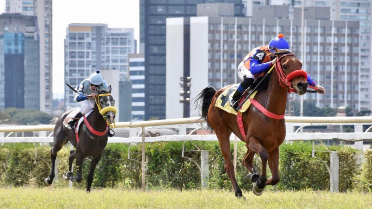 Ao todo, 8 fêmeas da raça se enfrentaram nos 1.000 m na pista de grama, pelo Prêmio UAE President Cup Series – Maiden Horses.