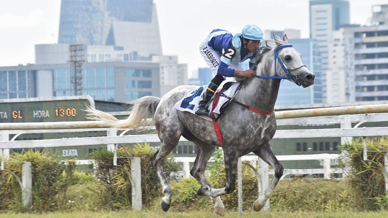 Sete machos da raça Árabe se enfrentaram no último sábado (07), nos 1.000 m na pista de grama do Jockey Club de São Paulo, pelo Prêmio UAE President Cup Series - Maiden Horses.