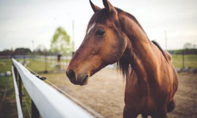 Saiba como preparar o seu cavalo para o retorno ao trabalho