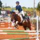27ª edição do Programa do Cavalo Árabe será especial Hipismo