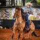 Curso de Team Roping será ministrado pelo Campeão Nacional 2021, Hugo Alves
