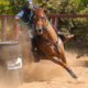 Funcionalidade do cavalo Árabe é destaque do Leilão Haras Cruzeiro