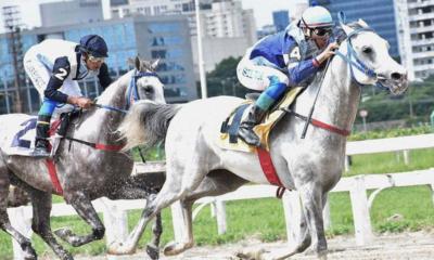 Grande Prêmio ABCCA 2021 acontece neste sábado no Jockey Club de SP