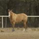 Invista em trabalho de chão com seu cavalo