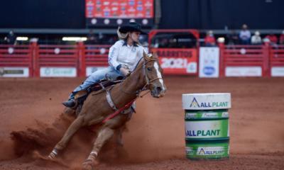 Saiba quais são os cuidados com os cavalos atletas durante as provas