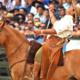 Saúde dos cascos é essencial para o sucesso dos cavalos crioulos
