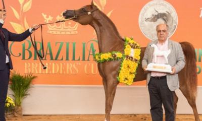 Tatuí sedia grandes eventos do cavalo Árabe nesta semana