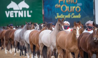 Vetnil é patrocinadora oficial da Morfologia do Cavalo Crioulo durante a Expointer