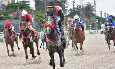 Cavalo Árabe em disputa pelo UAE President Cup Series For Maiden Horses III