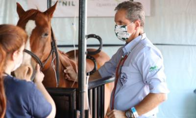 Cuidados pós-prova com cavalos é um dos pontos do bem-estar animal