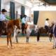 Inscrições para a Nacional do Cavalo Árabe estão abertas