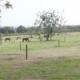 TV UC - Soltar o cavalo é parte do programa