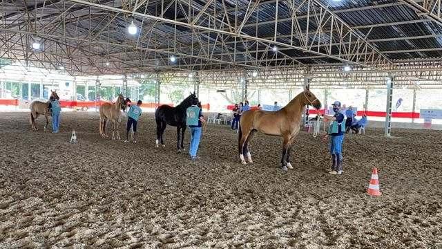 Acompanhe a 3ª Exposição do Cavalo Campolina de Jacareí 01