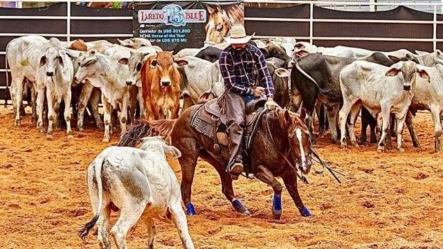 Apaixonado por cavalos, Aloísio Junior mantém seu haras na Bahia 01