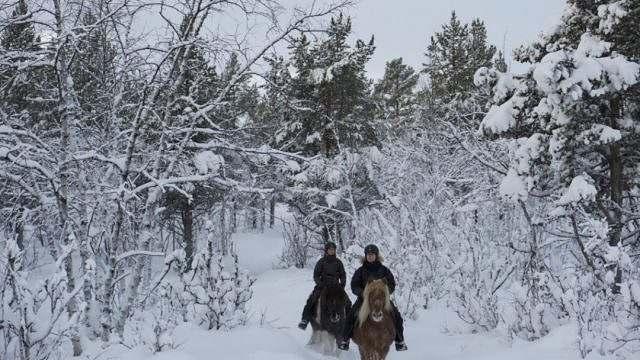 Cavalgada de Inverno na Suécia 03