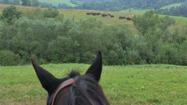 Cavalgada do Parque Nacional na Polônia 01