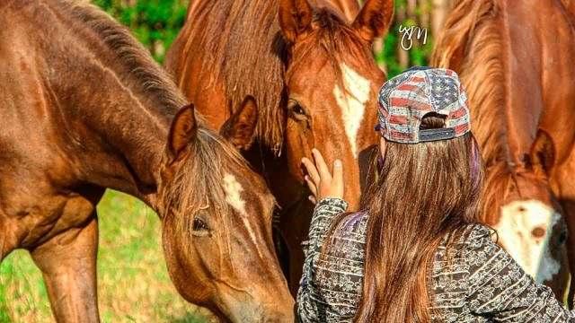 Curiosidades sobre o cavalo Quarto de Milha (1)