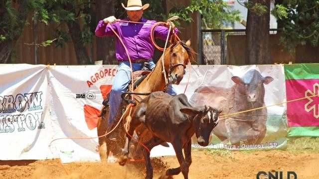 Team Roping 3 dicas para você iniciar corretamente seu cavalo 01