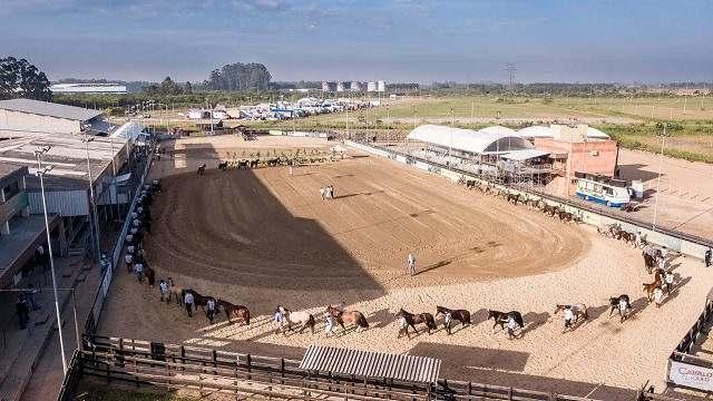 Com acesso restrito, provas do cavalo Crioulo voltam em Esteio