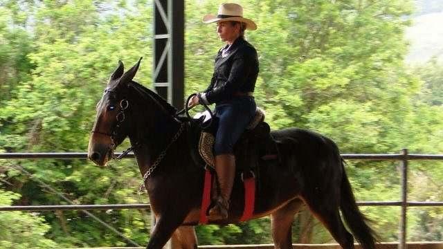 Pontos a observar quando for comprar um cavalo (3)