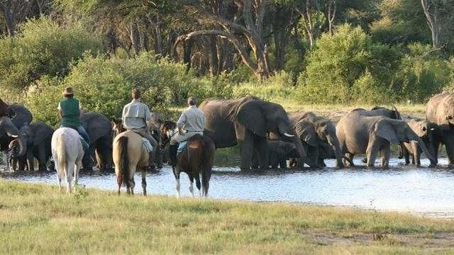 Safári no Zimbabue - parte 2 01